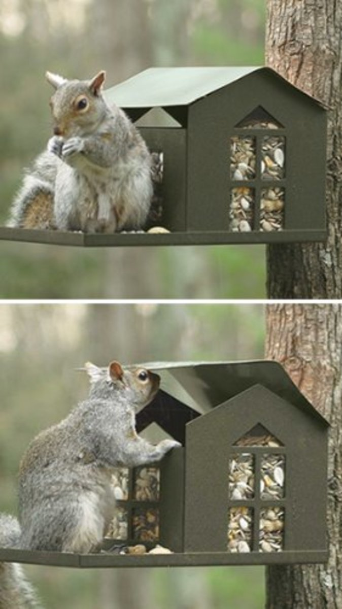 Metal Squirrel Feeder