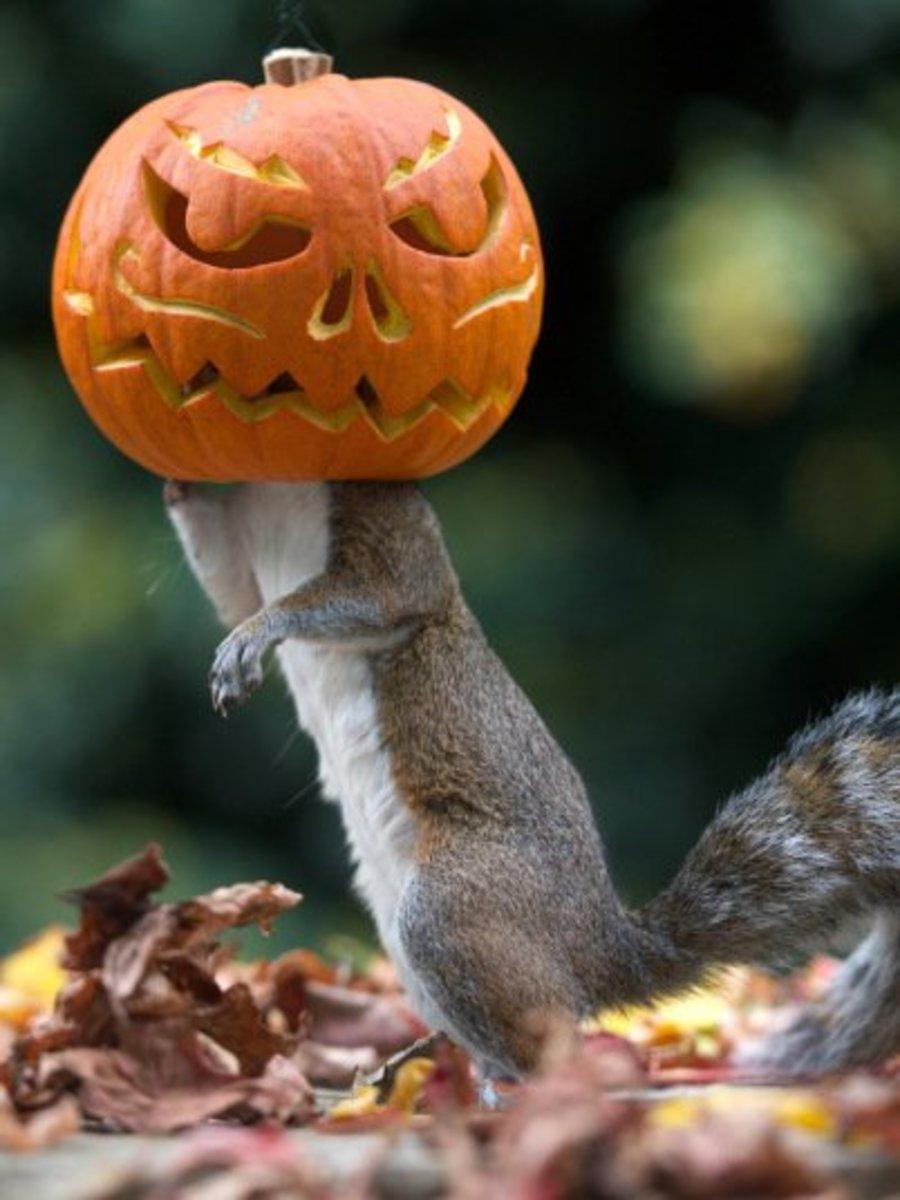 Home made pumpkin head feeder