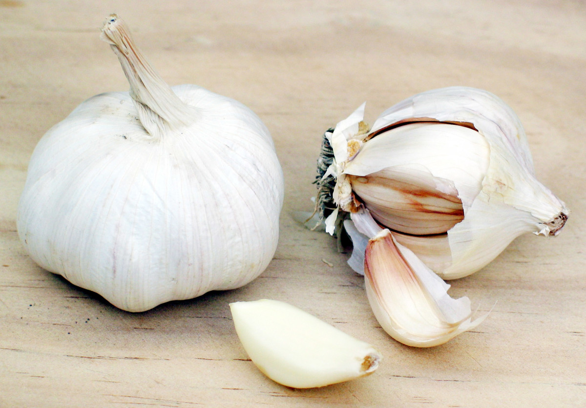 Of course, literally eating garlic can give you an odor of garlic. The sulfur from it can stay in your system for quite awhile.