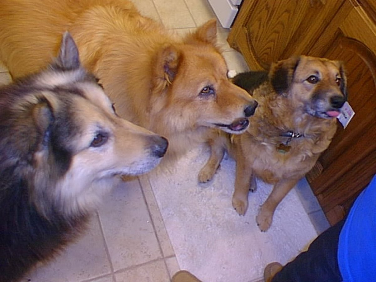 Buddy, Dolly and Cookie wait patiently for their turn.
