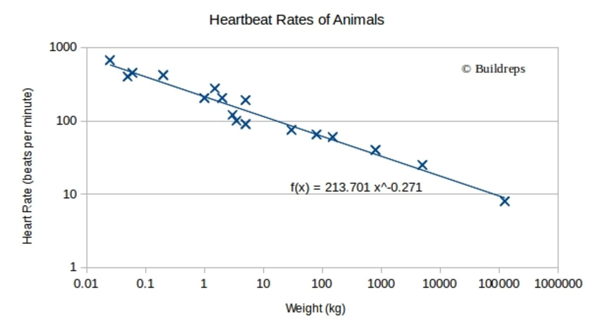 Relation between weights and heart rates. Note: both X and Y-axis are logarithmic.
