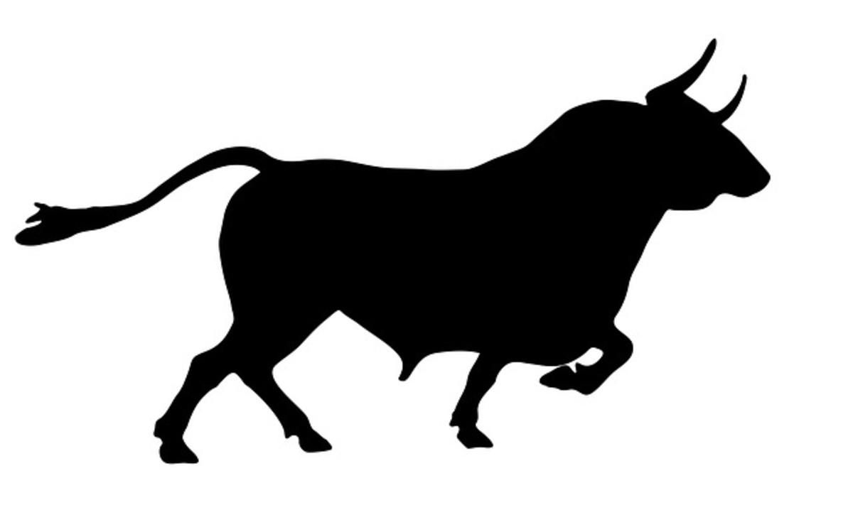 Nandi Bull