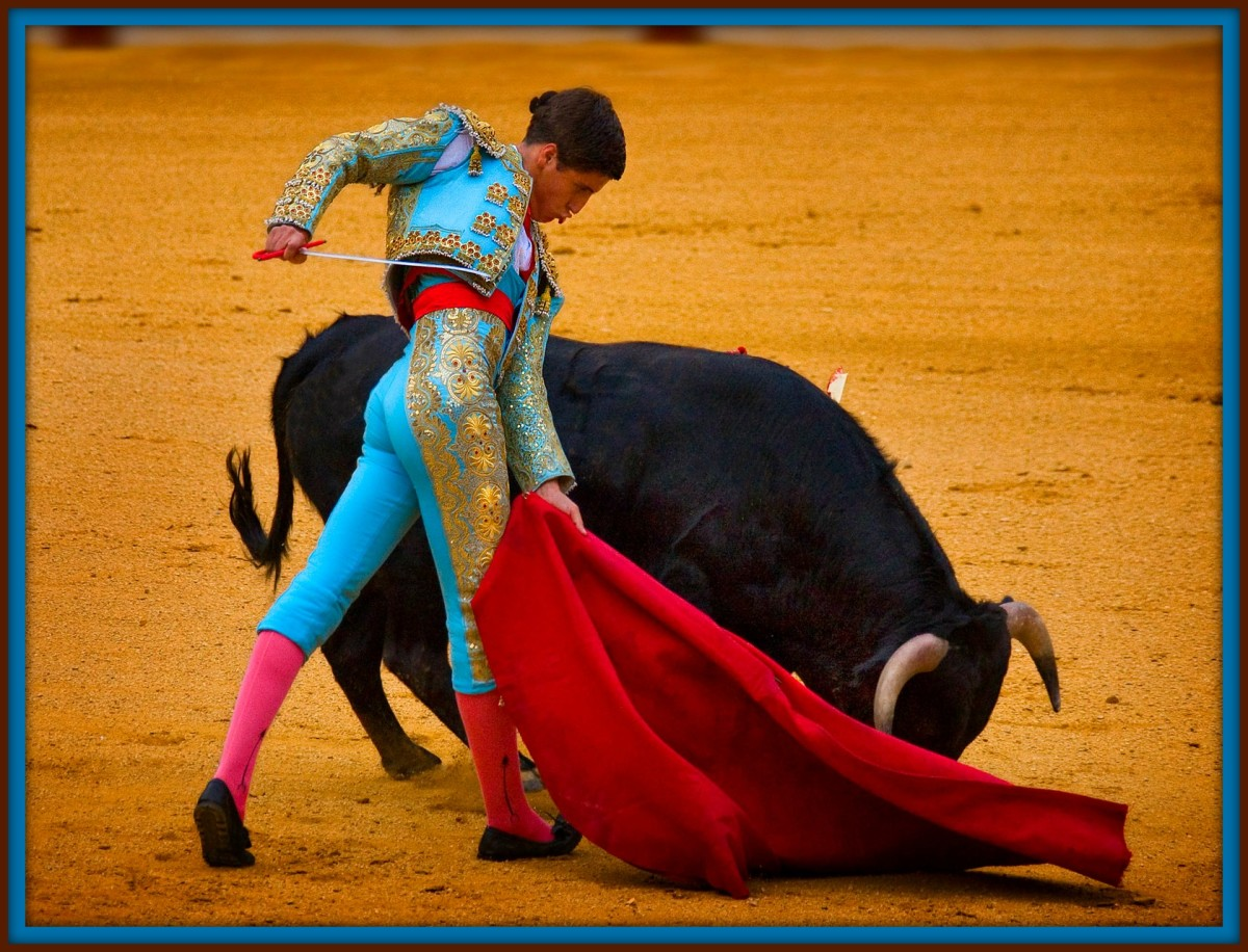 Bull Fight, is a contest between men and bulls, conducted as a public spectacle. Once popular in Greece and Rome, this form of entertainment was probably introduced by the Moors into Spain.