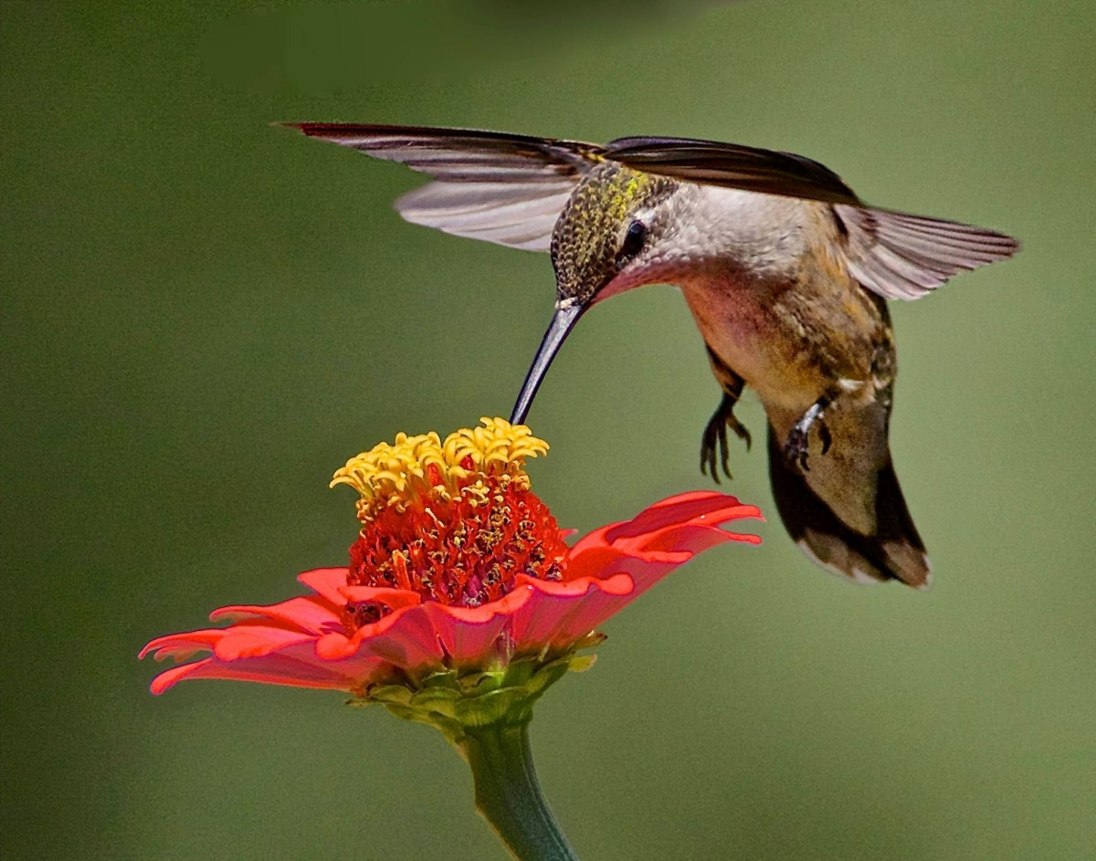 Hummingbirds are naturally attracted to bright colors, so try to make your yard as appealing to them as possible. Keep your yard filled with nectar-rich, bright flowers and you can bet they will come back time and time again.