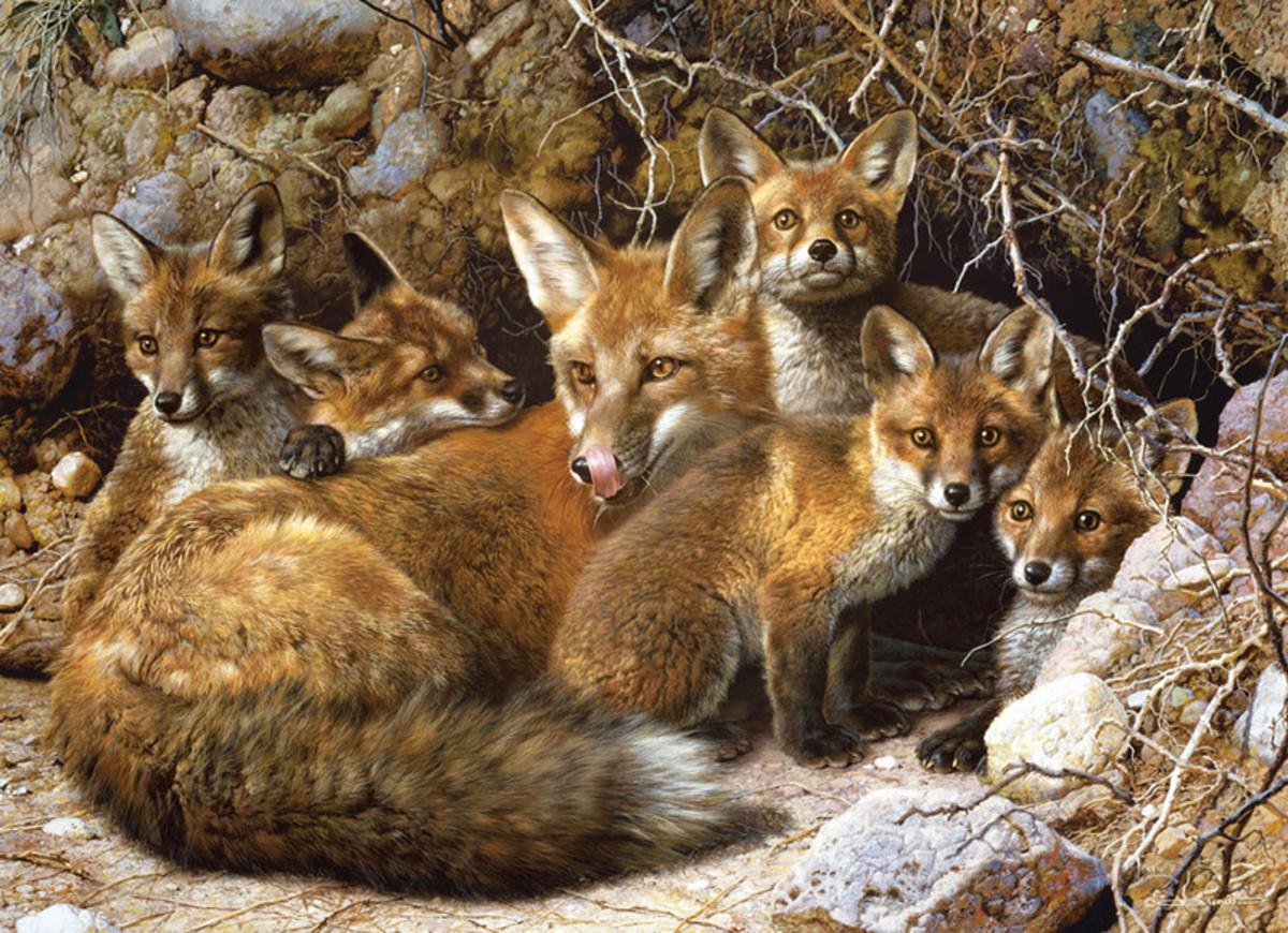 The fox life span