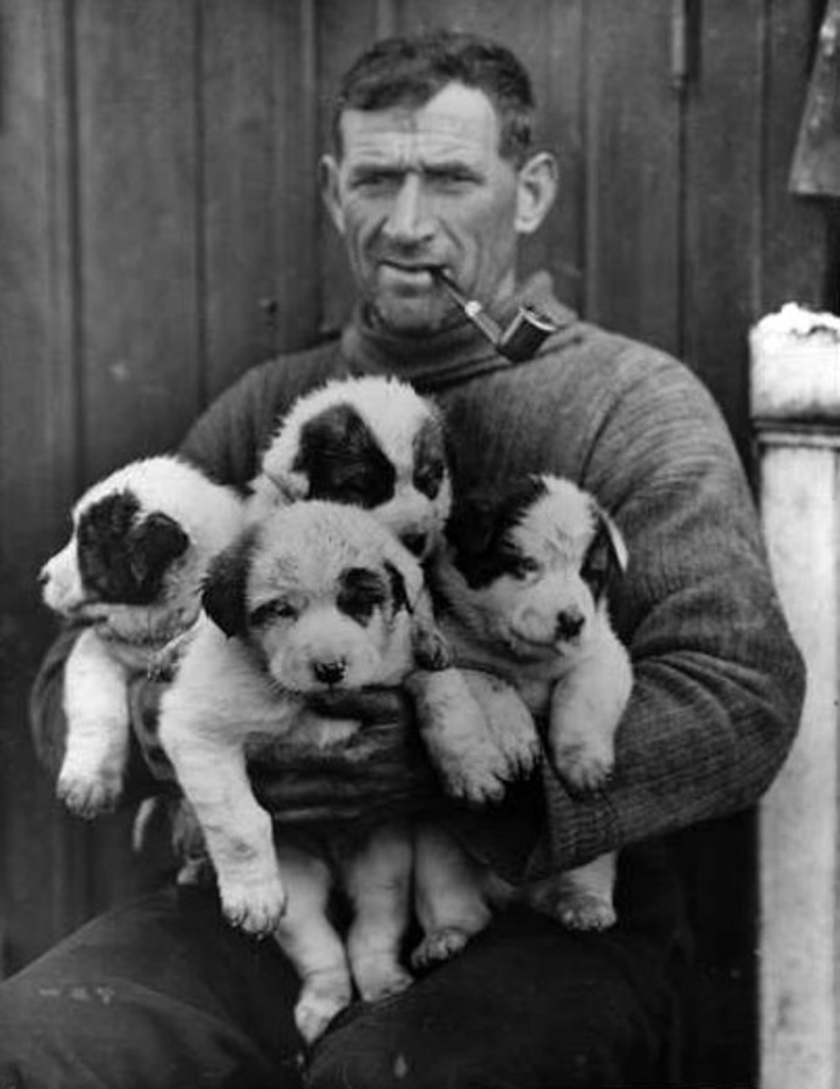 Crean and His Pups, taken during the Shackleton Expedition 1914-1916