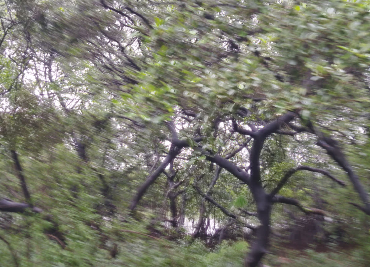 A view from the mangrove thicket