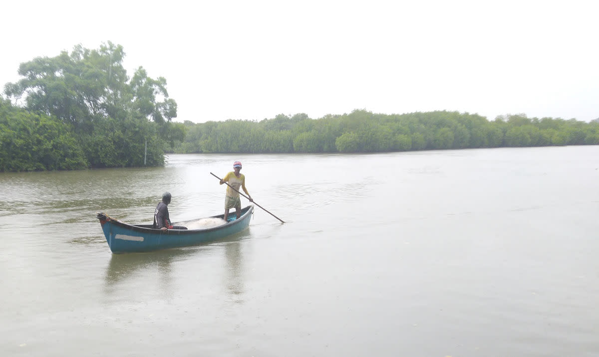 A view of the mangrove island
