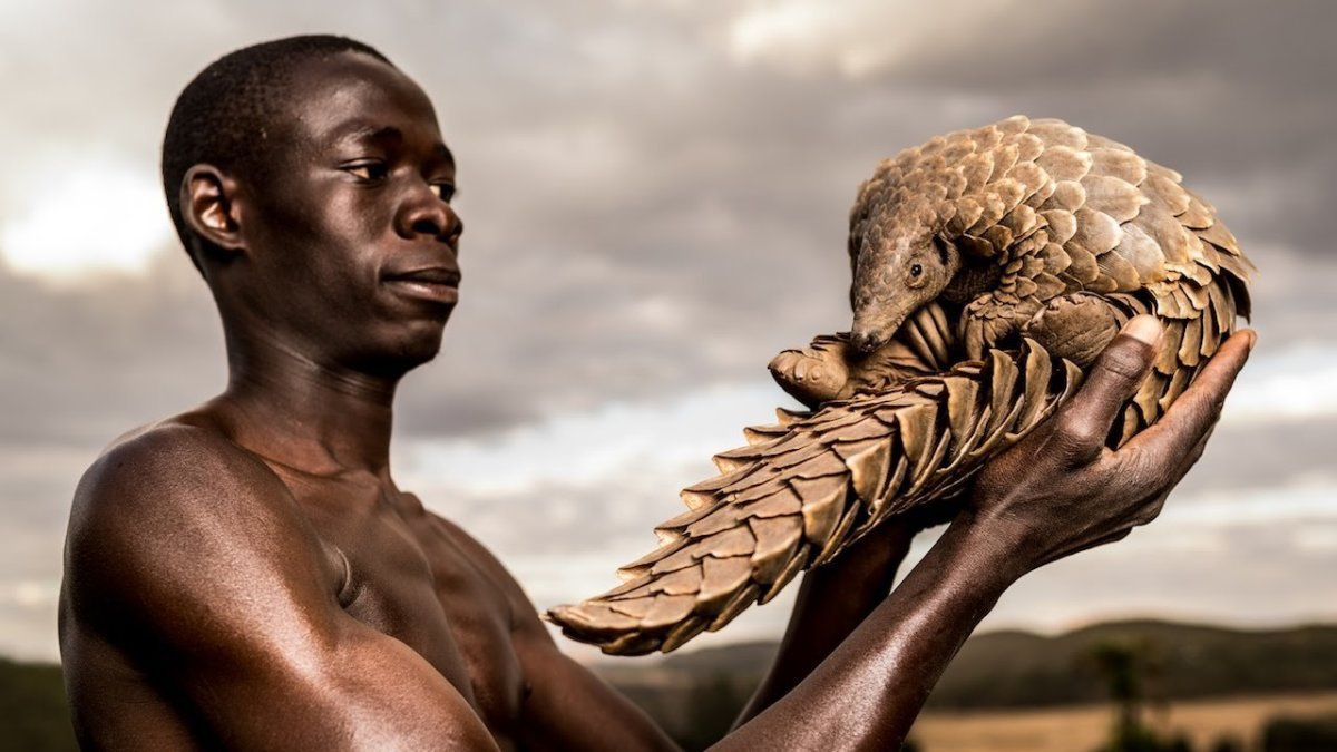 Pangolin: The Most Trafficked Animal in the World