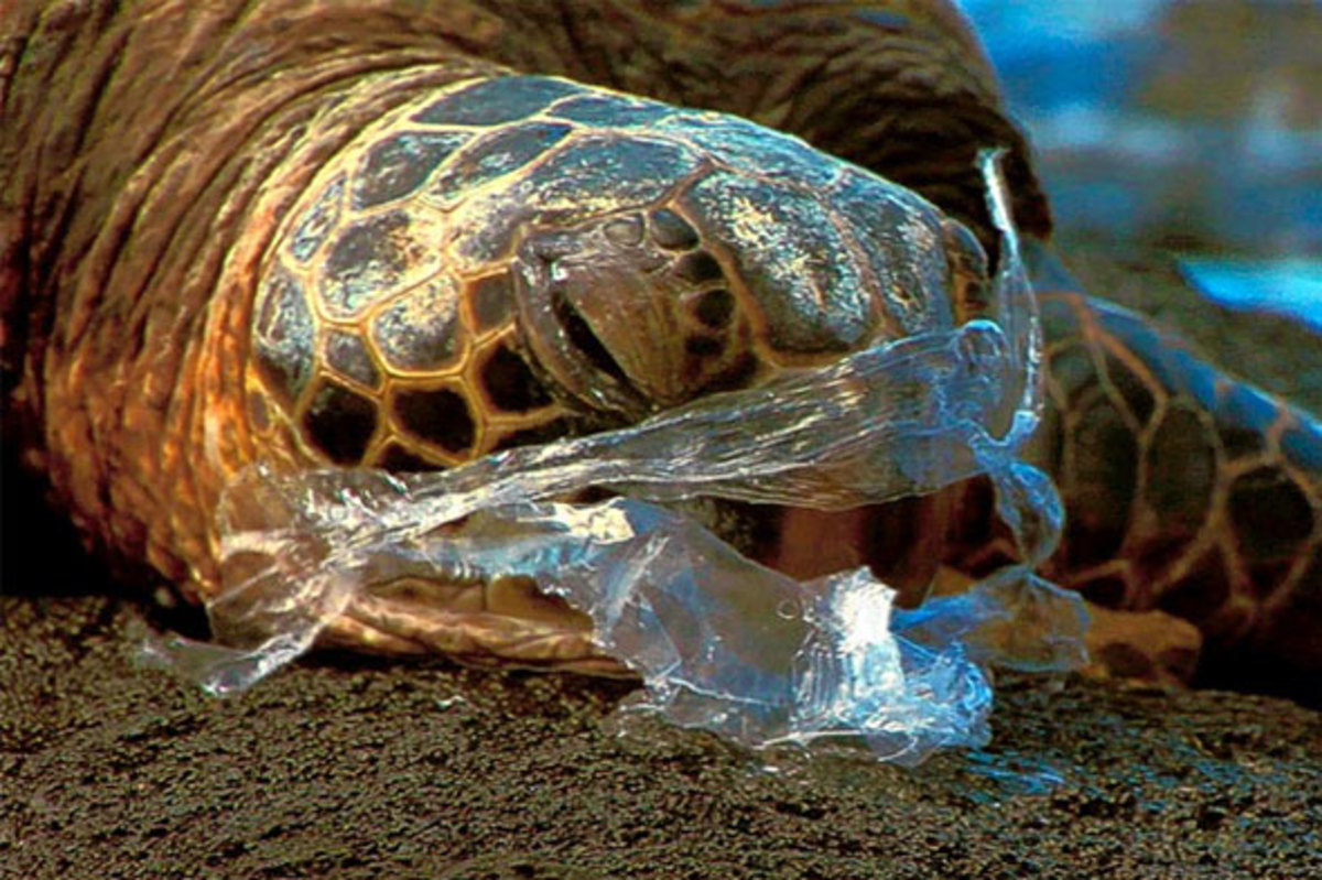 what-if-we-never-invented-plastic