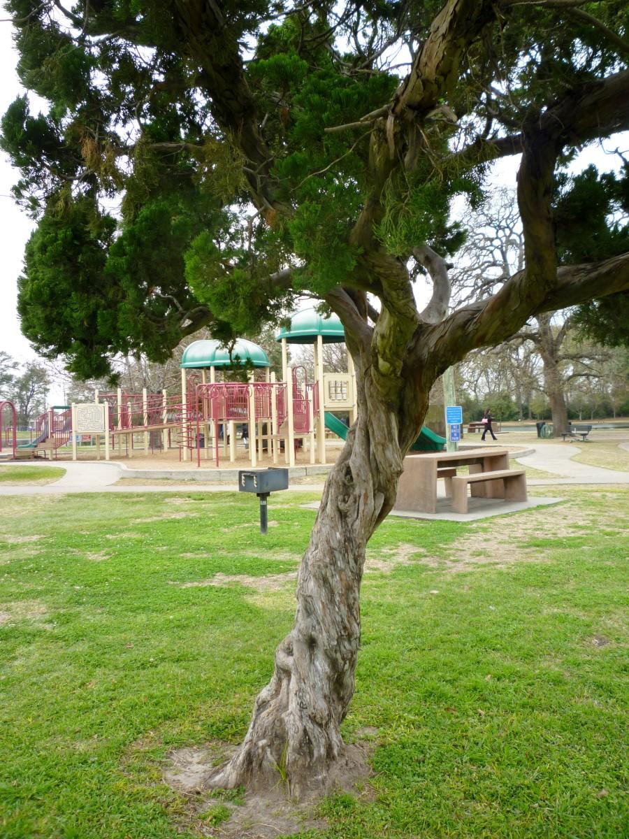 Bane Park