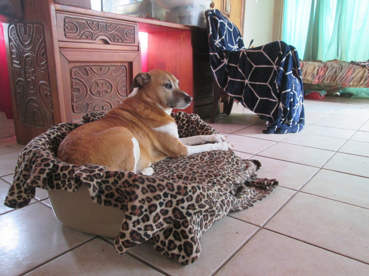 top-6-benefits-of-plastic-dog-baskets