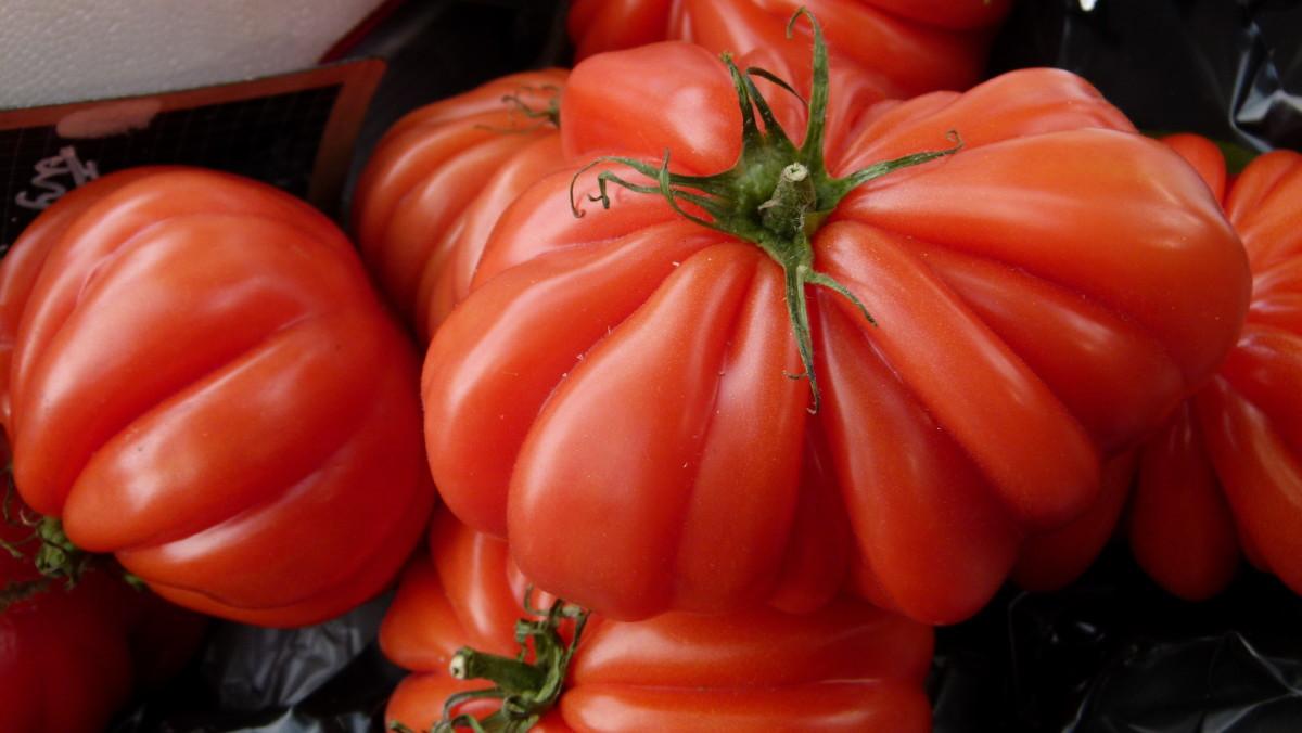 Constoluto Genovese Tomato
