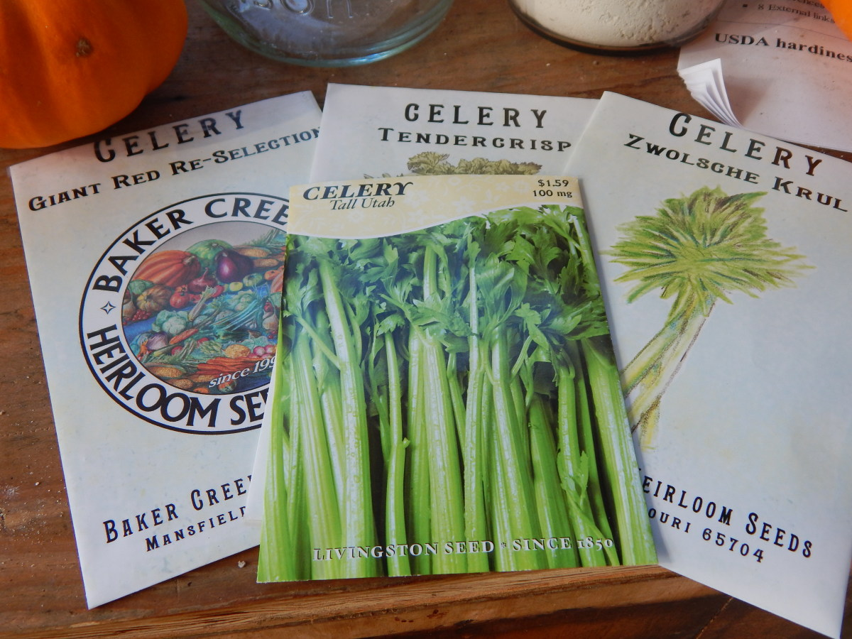 Choose Your Variety Celery Seed