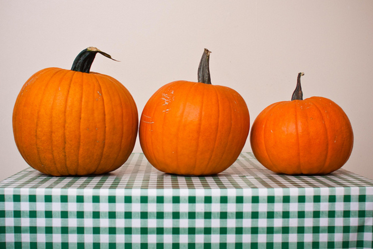 Three Pumpkins on a table