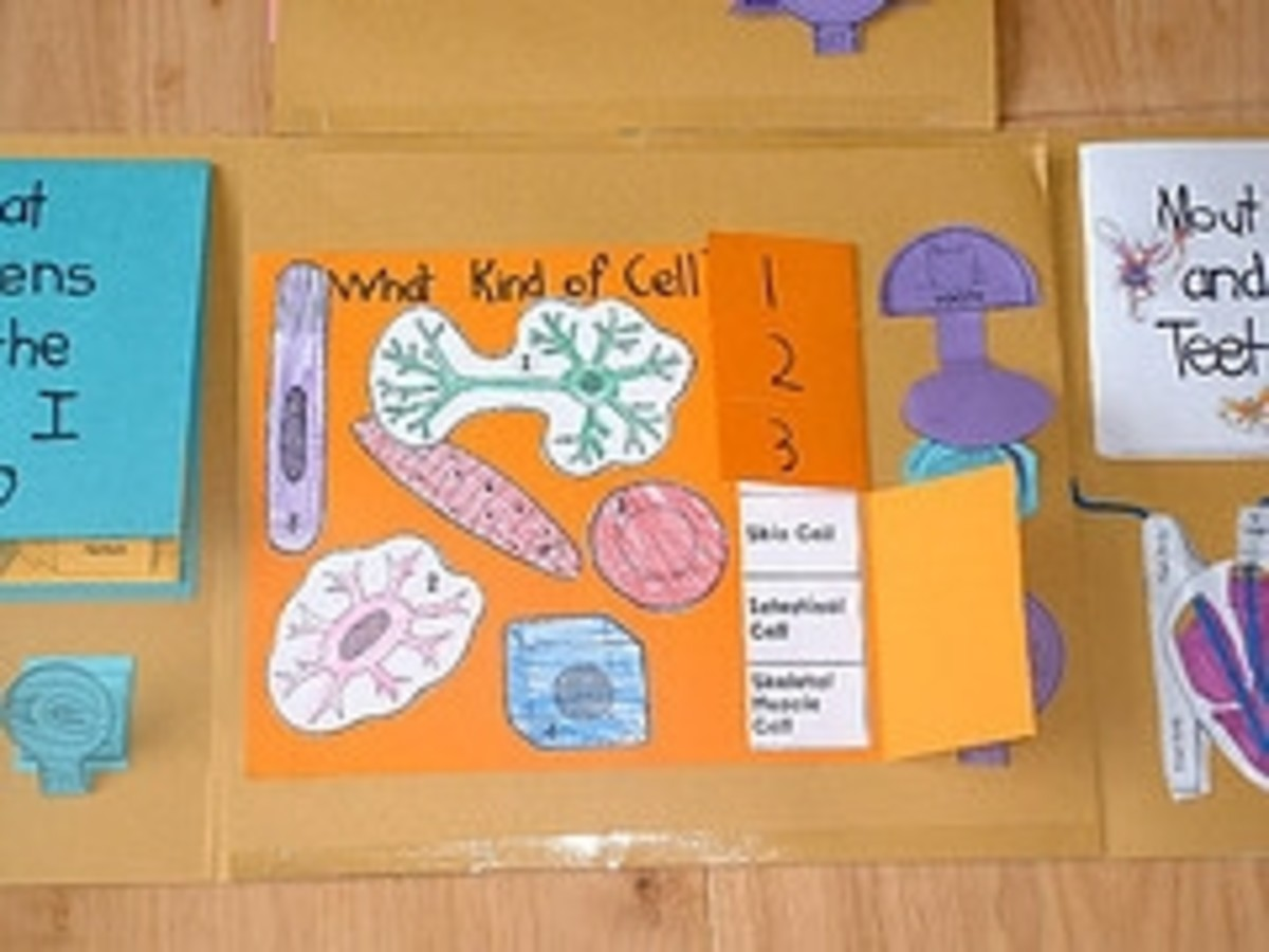 human body lapbook inside