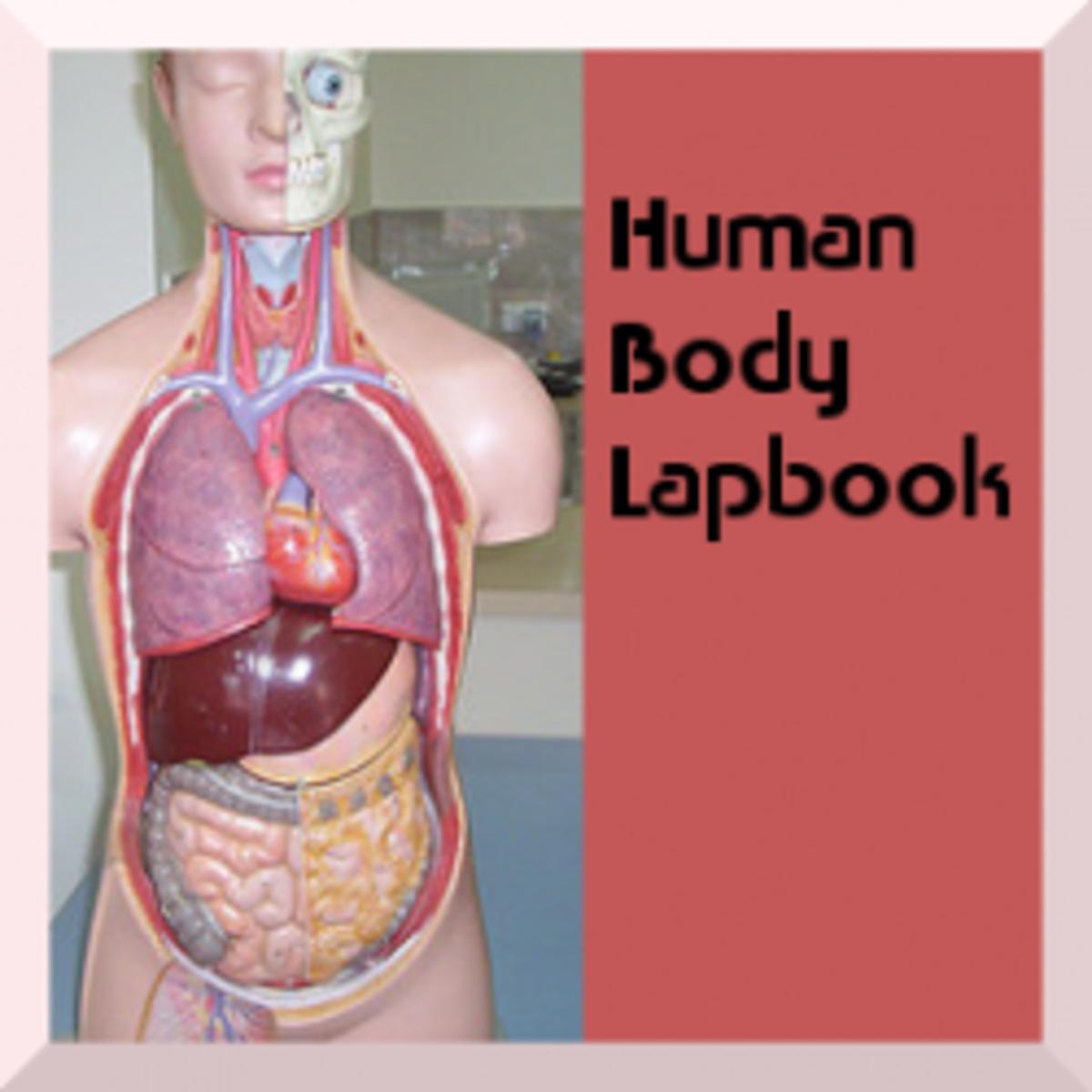 humanbodylapbook
