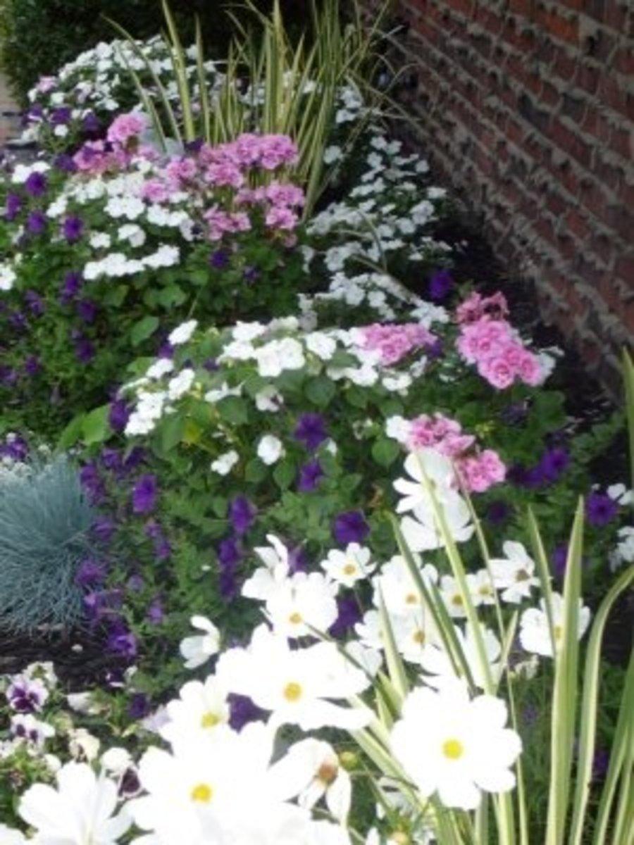 A bit Of My English Garden...