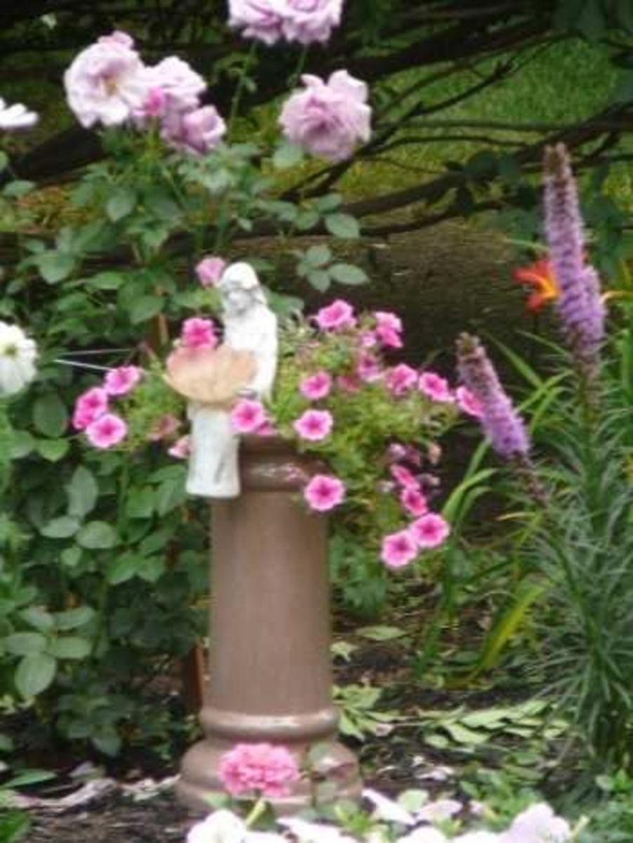 Fairy's rose garden..