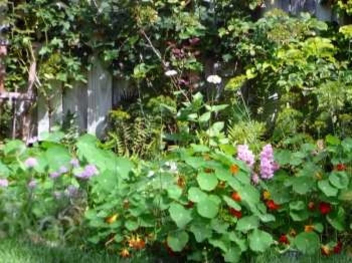 My Garden Gate...
