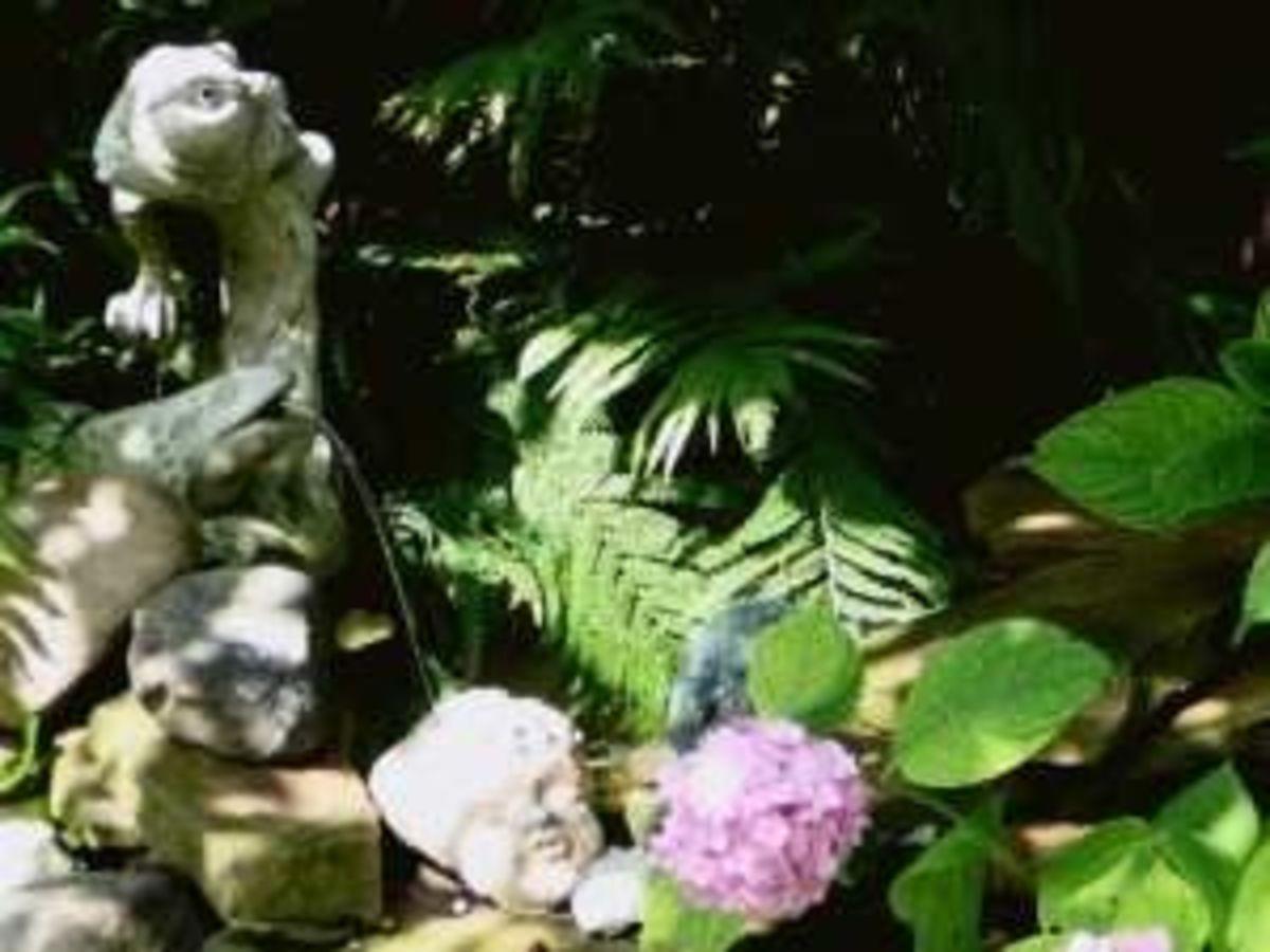 Spitting Frog among the fern...