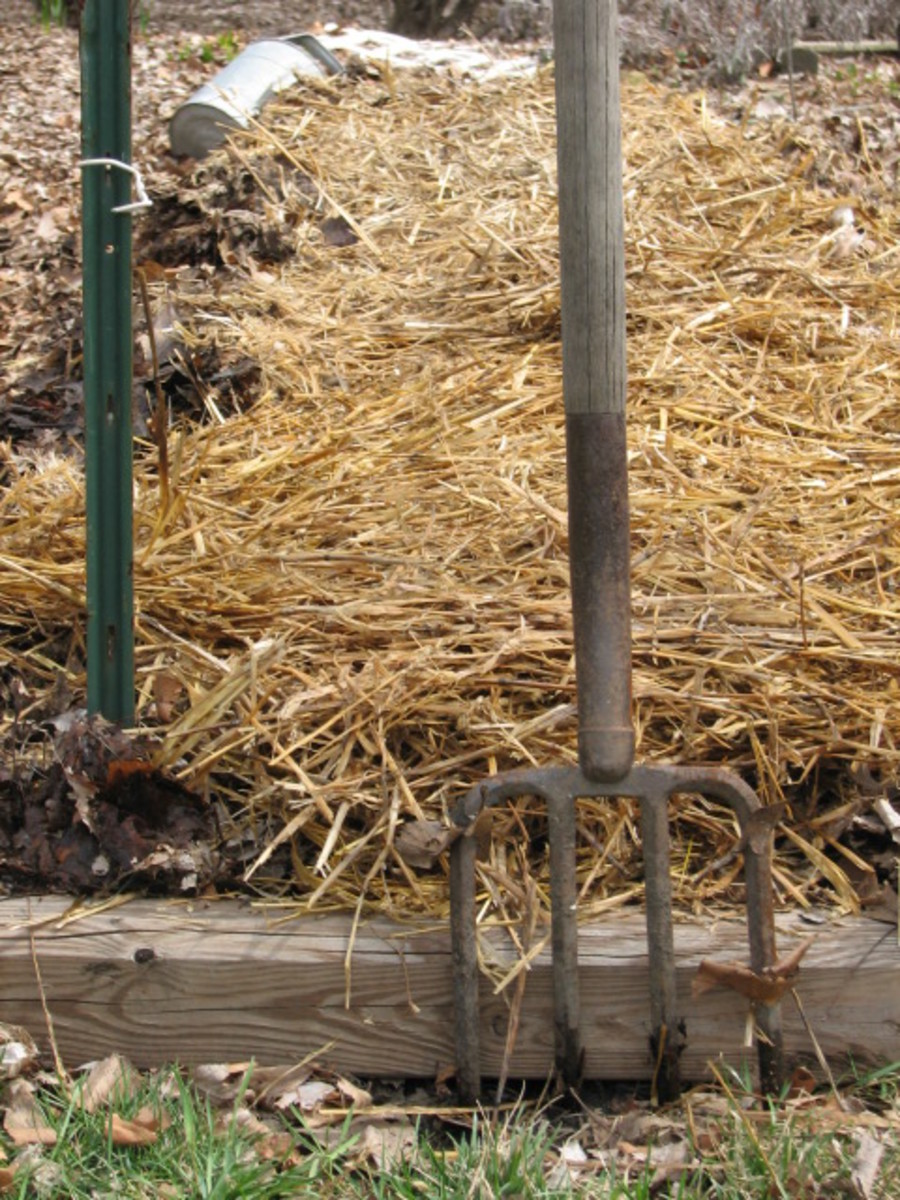 """4"""" of loose straw tops the job of planting spuds"""