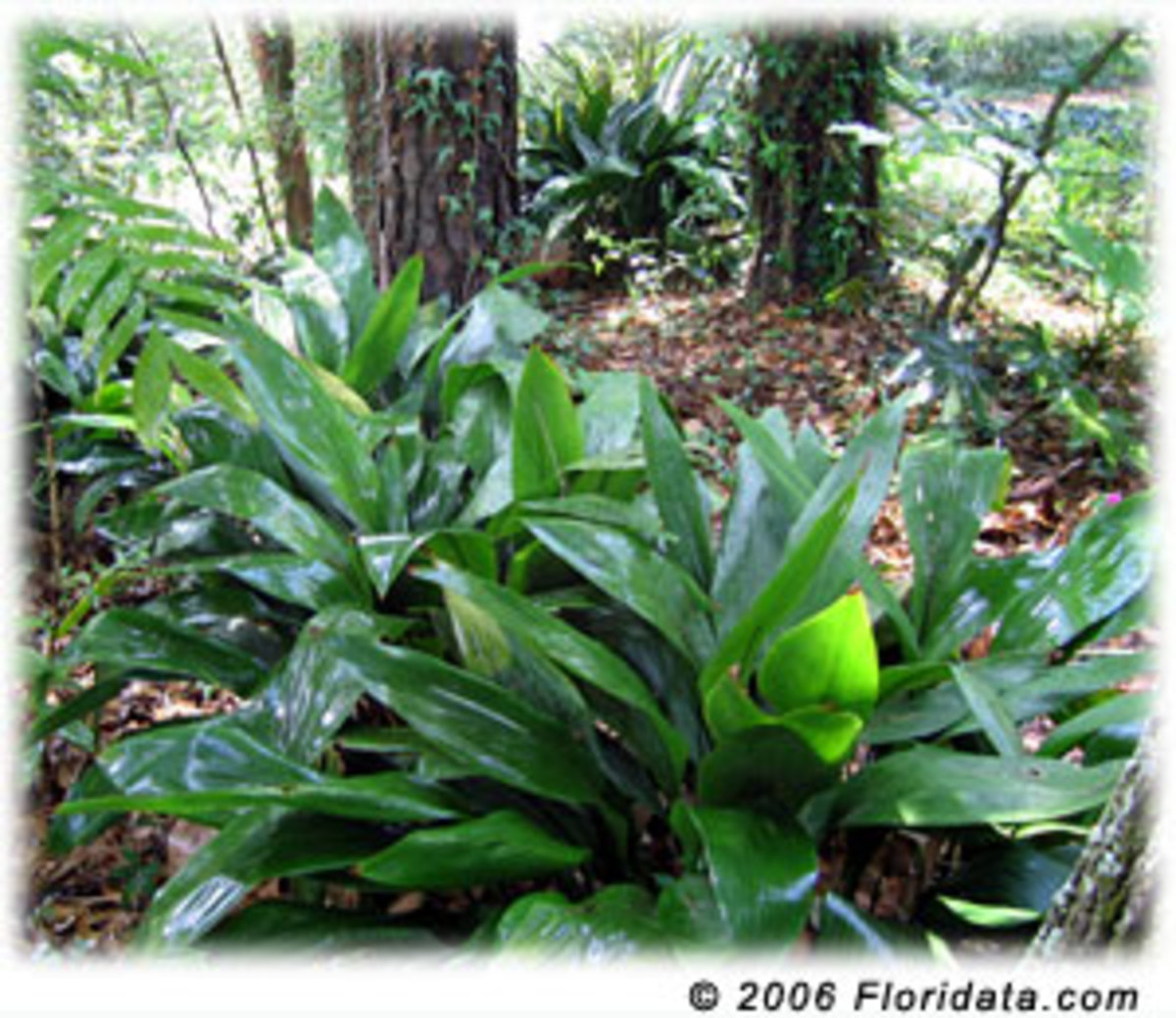Good (and good looking) plants for extremely low-light spots in a yard/garden