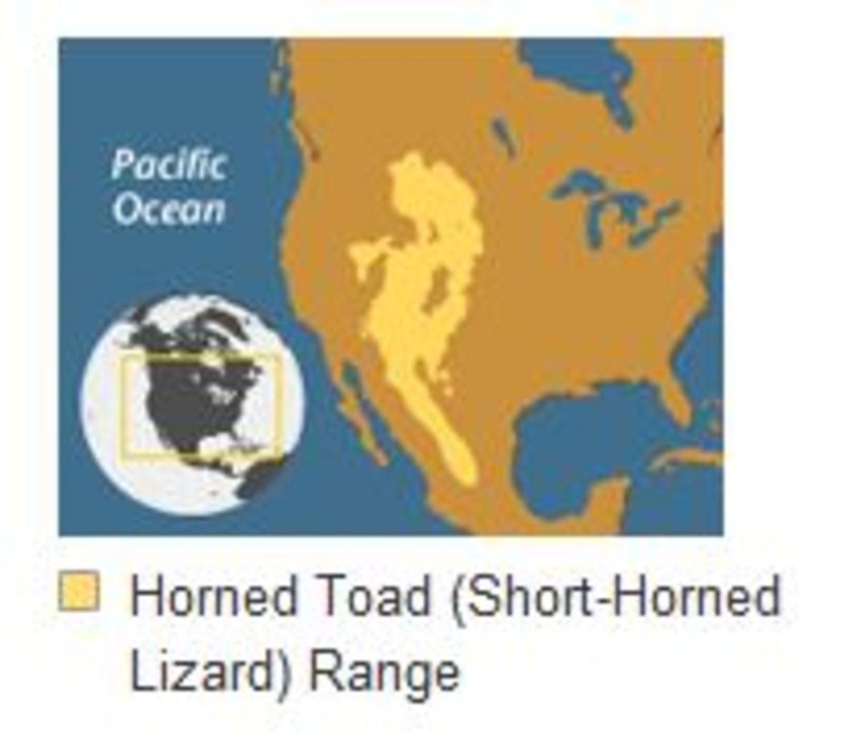 Horned Lizard & Velvet Ants