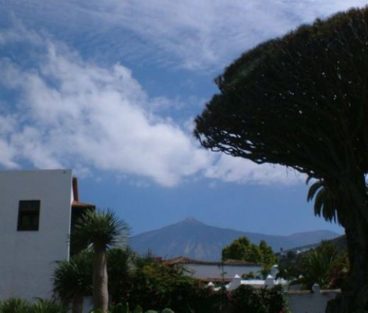 Drago Milenario with Mt Teide in the background
