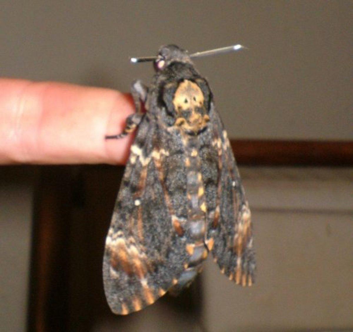 miniature-world-of-winged-wonders