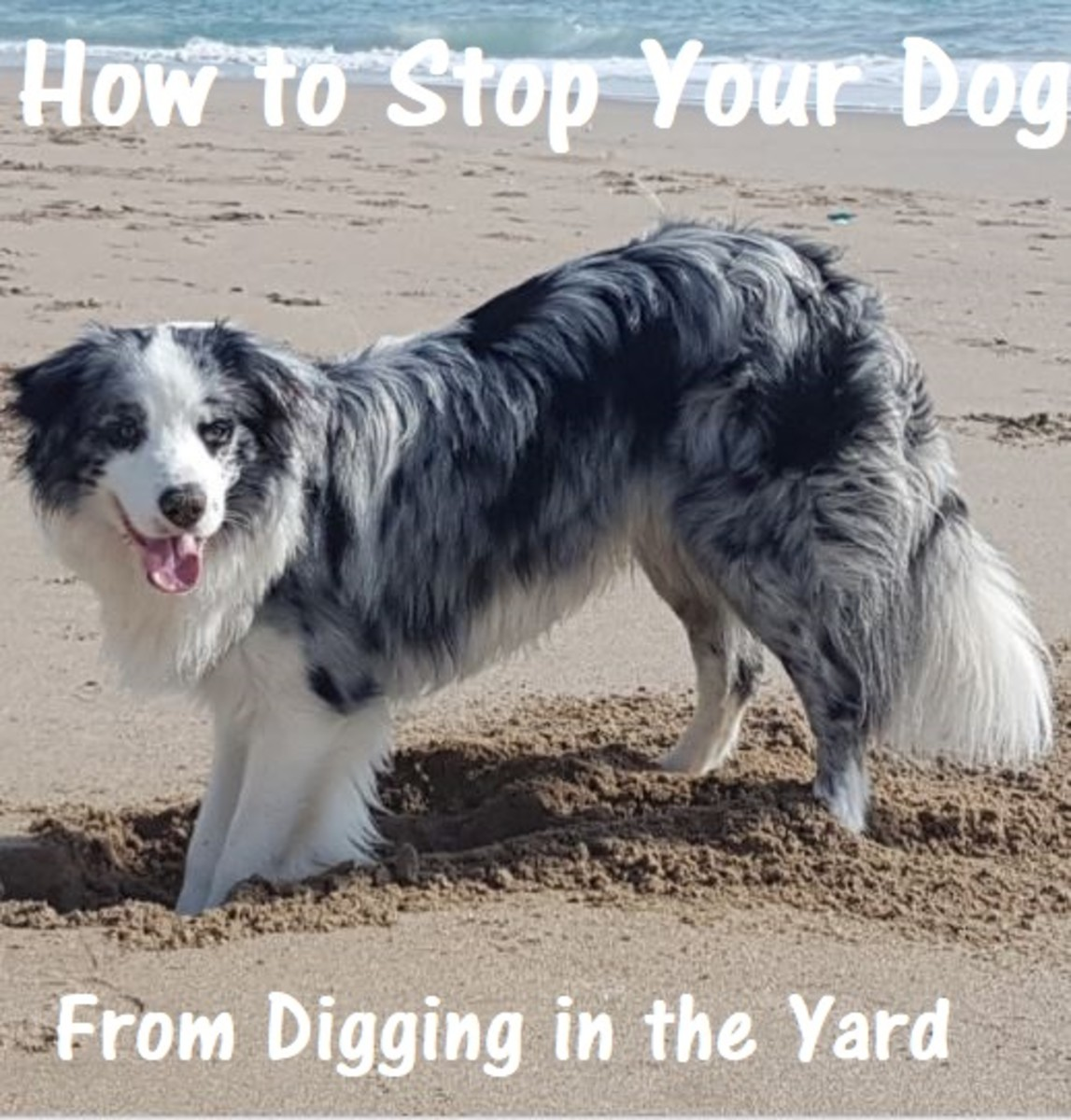 how-to-stop-your-dog-from-digging