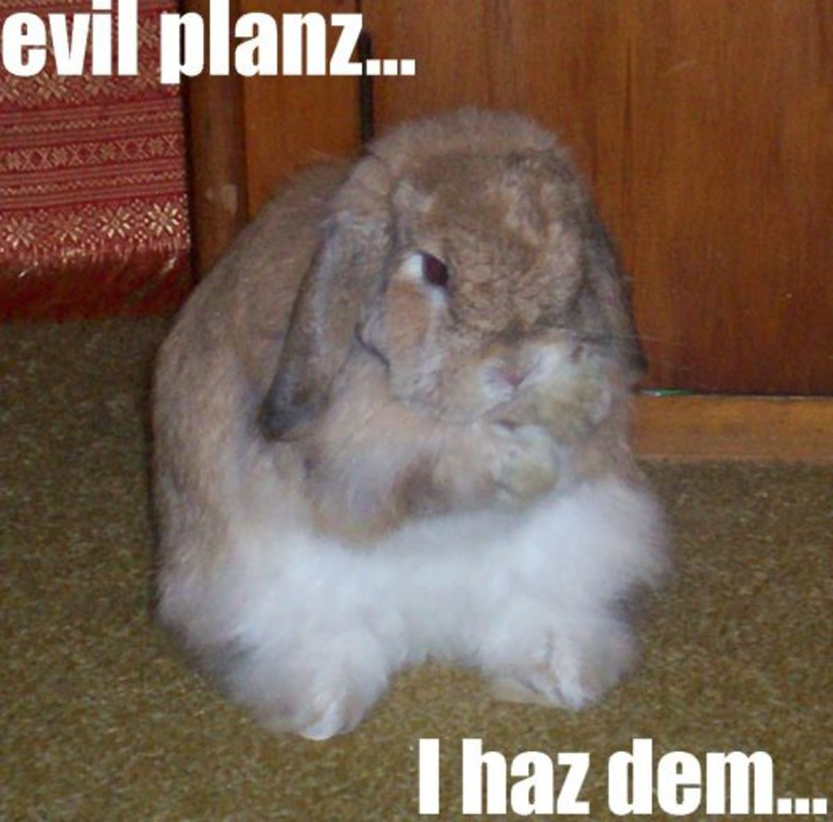 66 6 Good Names For Bad Bunnies | HubPages