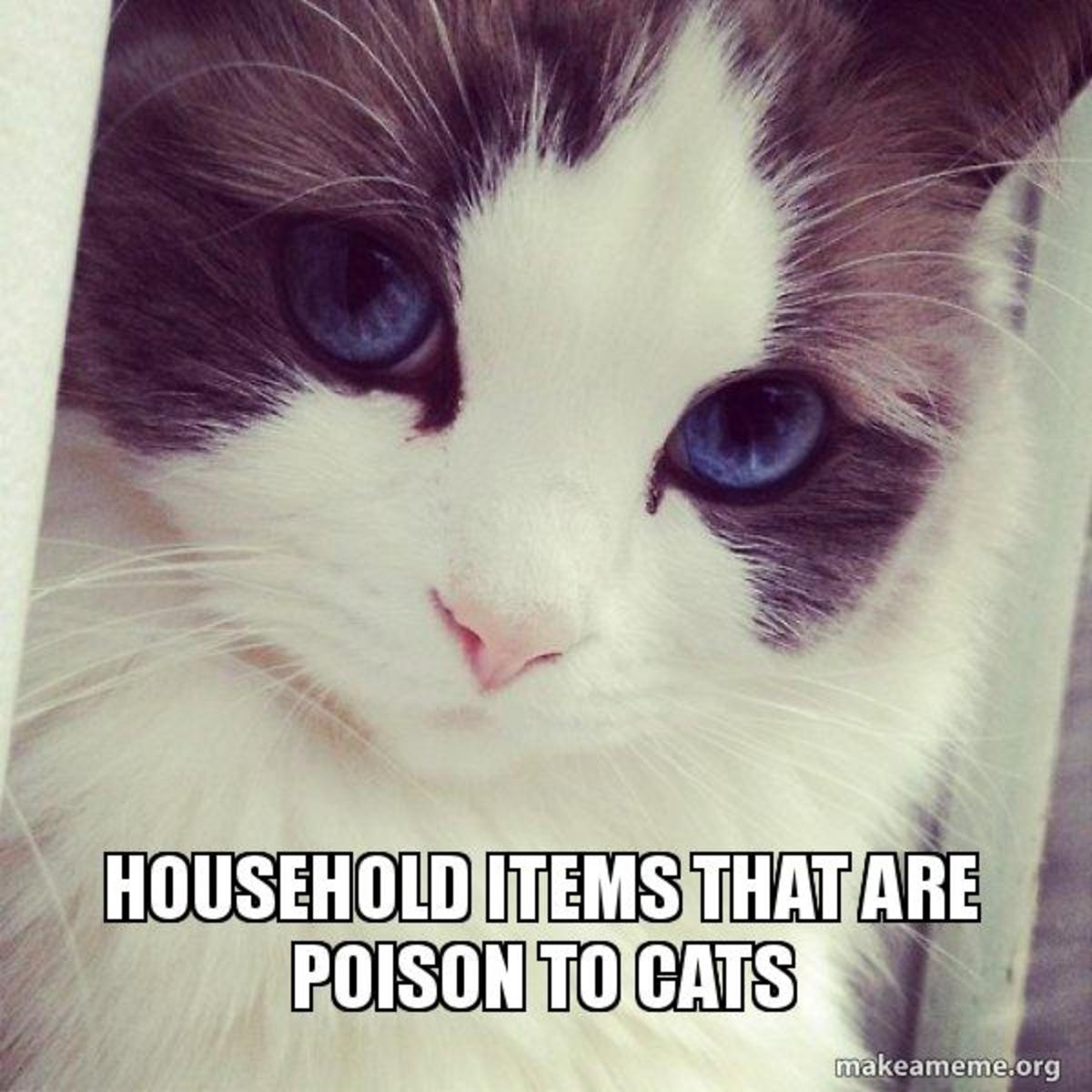 Household Poisons To Your Cat