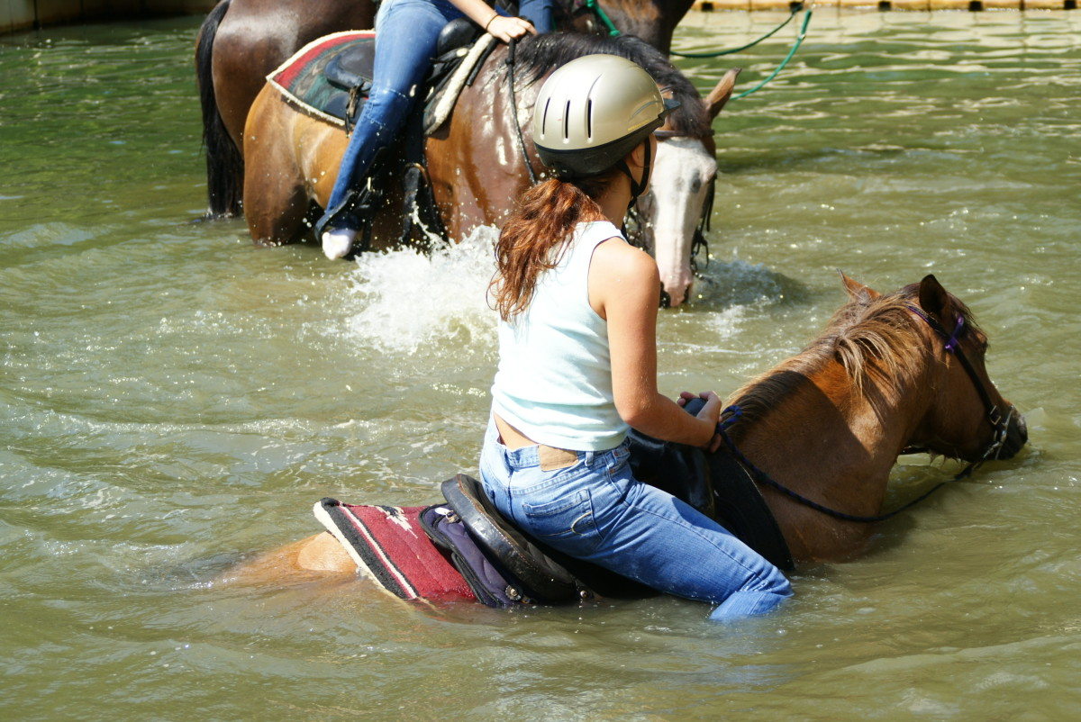 Not every horse can swim so be sure yours can before taking it in water.
