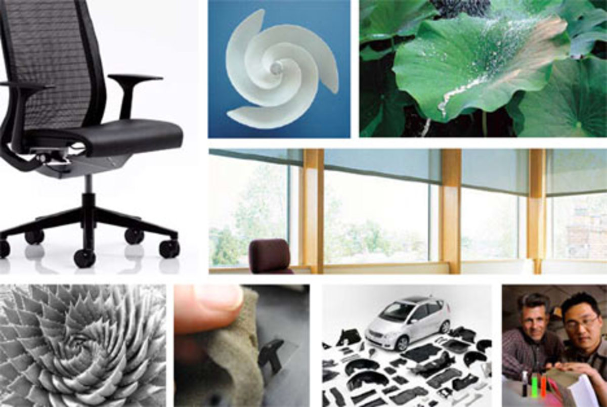 Biomimicry: Inventions Inspired by Animals