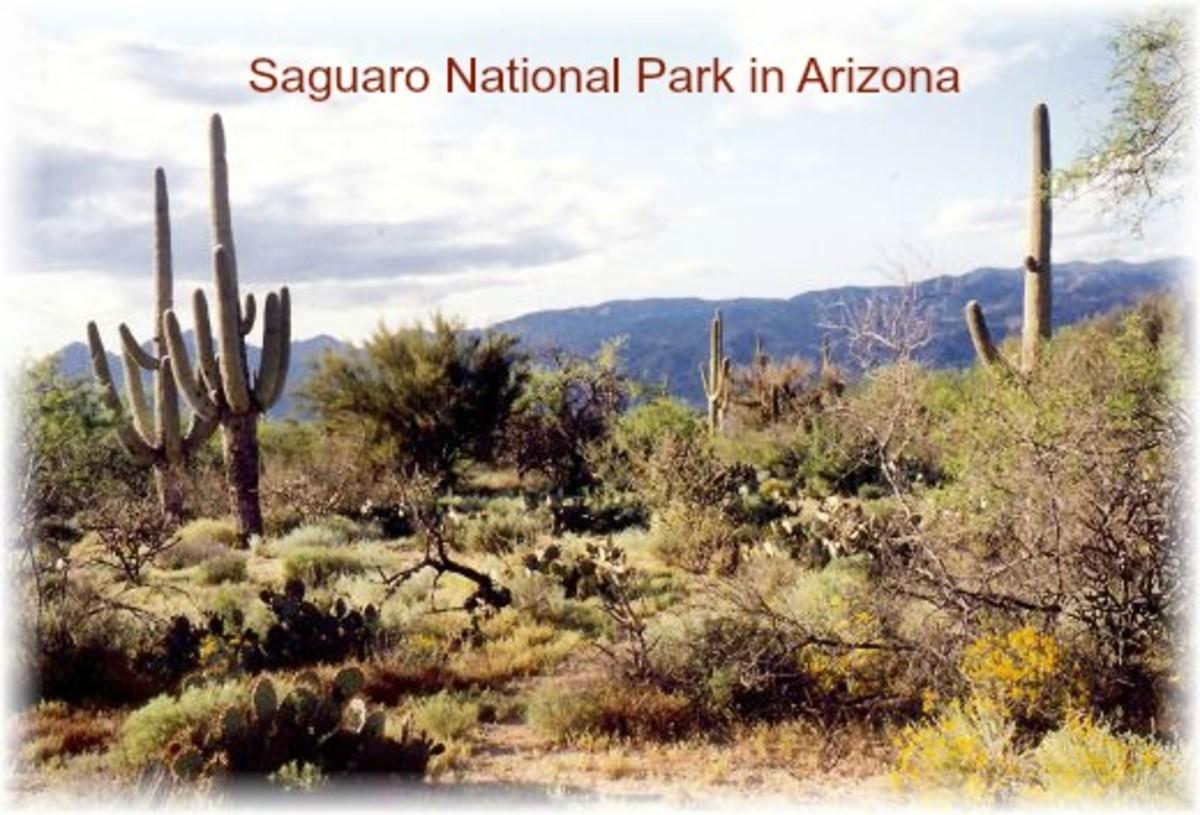 Pictures of Saguaro Cactus National Park in Arizona - Sonoran Desert near Tucson