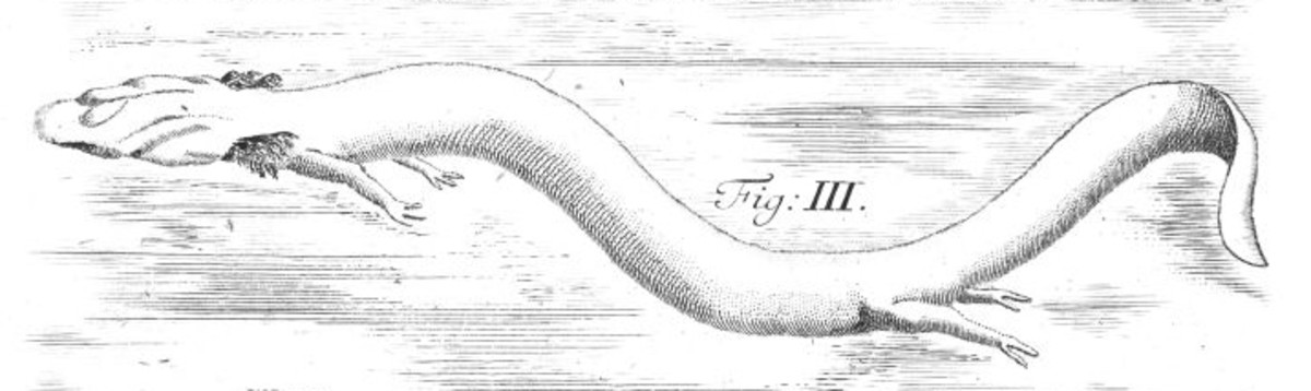 Sketch for scientific paper drawn in the 1700's.