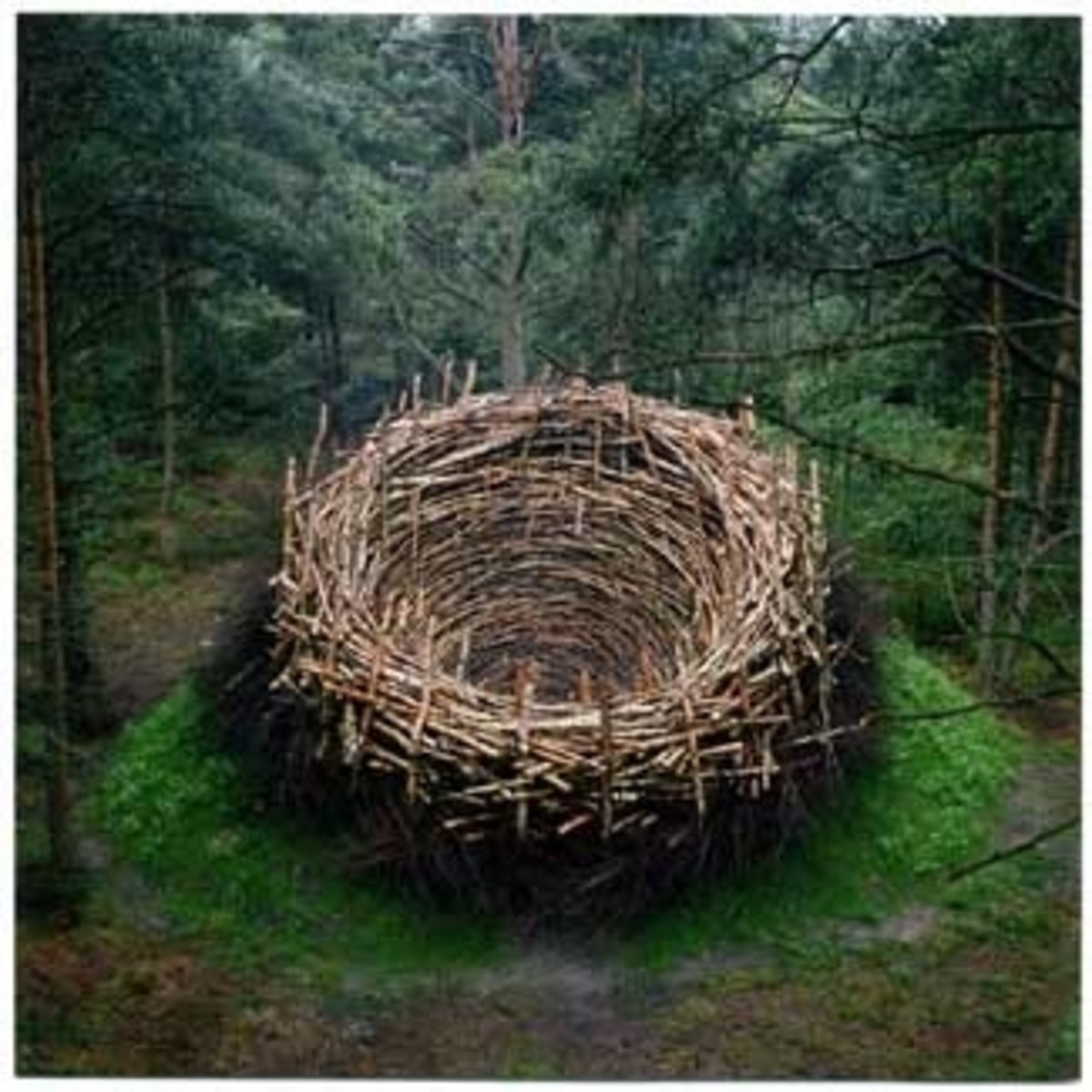 Bird's Nest (Huge!)