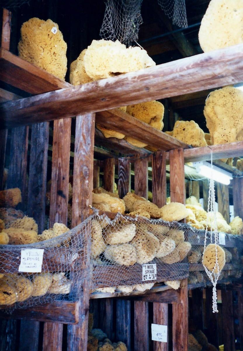 Sponges in Tarpon Springs, Florida