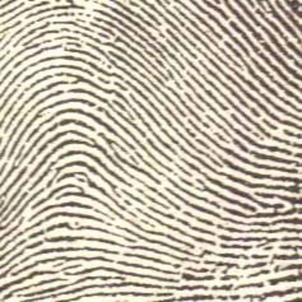 Dactyloscopy The Forensic Science Of Fingerprint Identification Hubpages