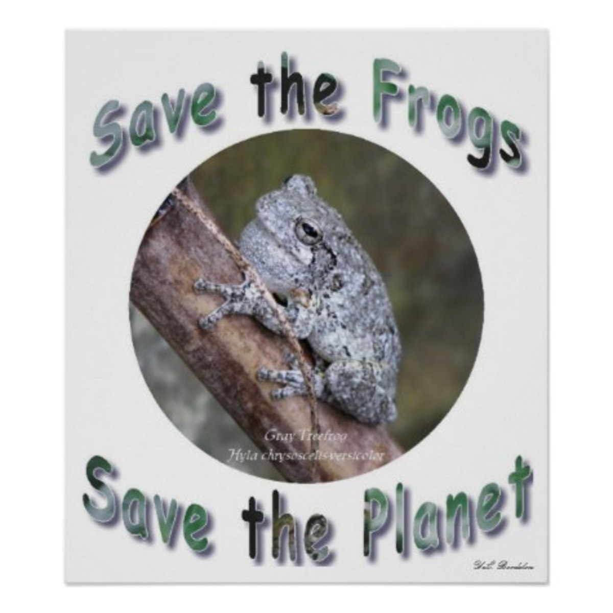 gray-treefrog-louisiana