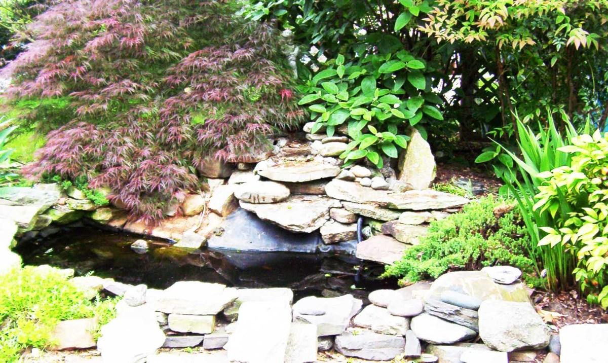 backyardbirdsanctuary---attractbirds-oyouryard