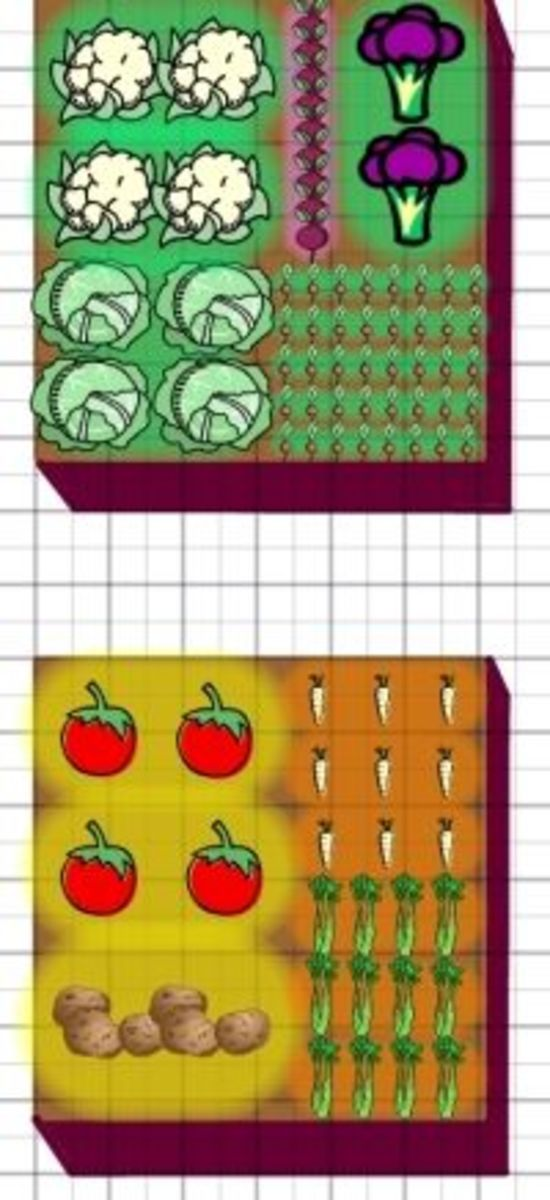 vegetable garden layout raised beds