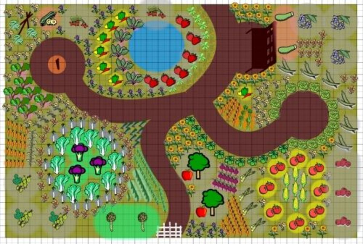 Vegetable garden layout for Vegetable garden designs and layouts
