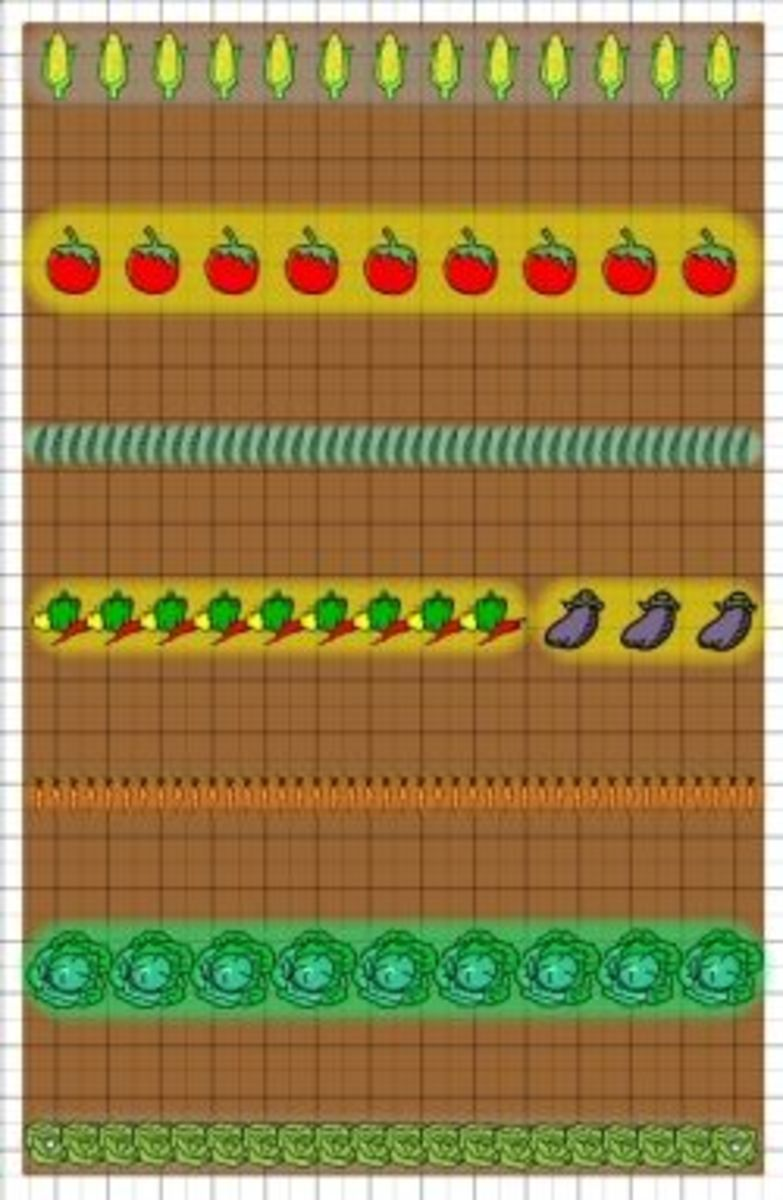 traditional vegetable garden layout