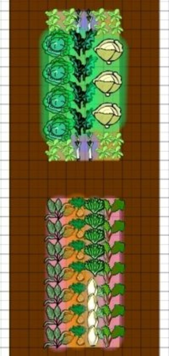 Winter vegetable garden layout