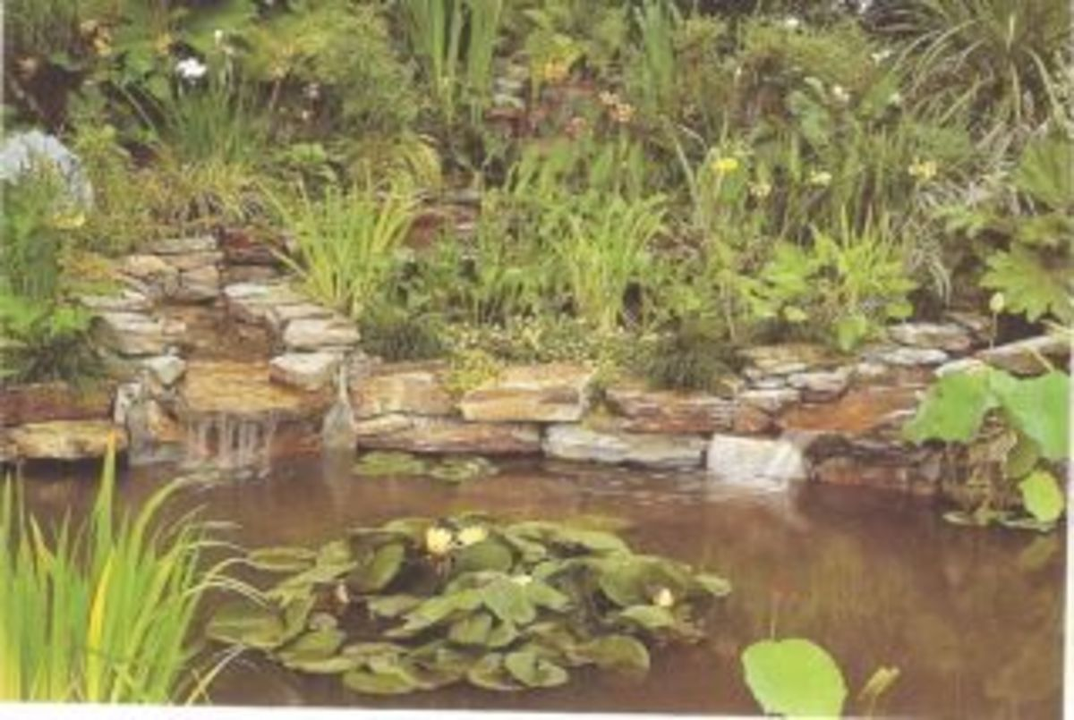 Small outdoor garden ponds hubpages for Koi pond hiding places