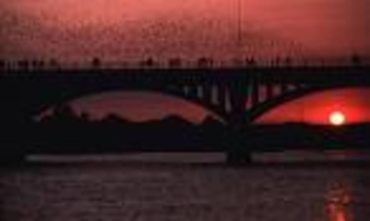 Bats at Sunset under the Congress Ave. bridge in Austin, TX
