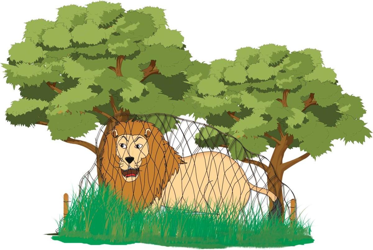 Sheru Lion is caught in the net