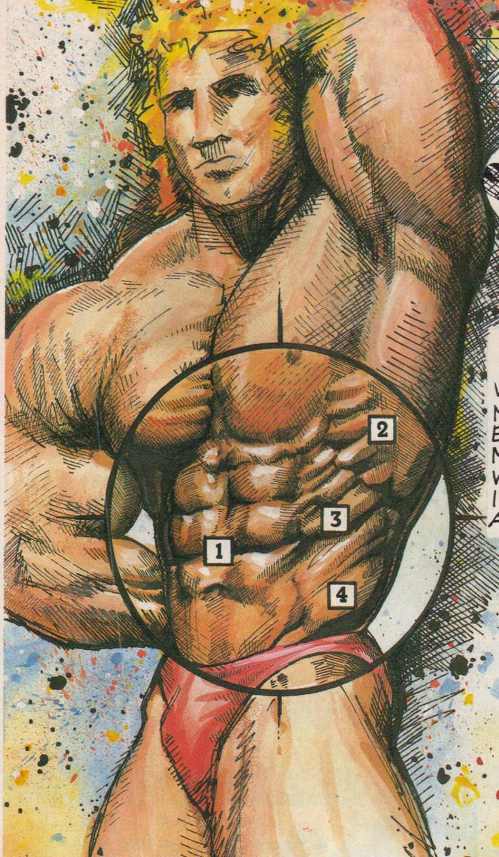 1. Abdominals, 2. Serratus, 3. Intercostals, 4. Obliques
